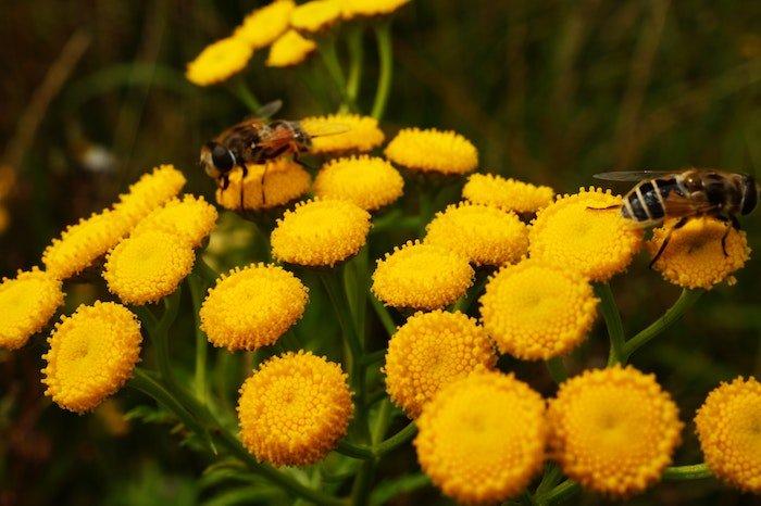 positive-news-bees-pesticides.jpg