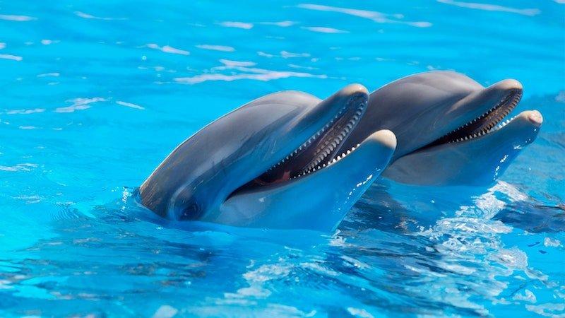 positive-news-dolphins.jpg