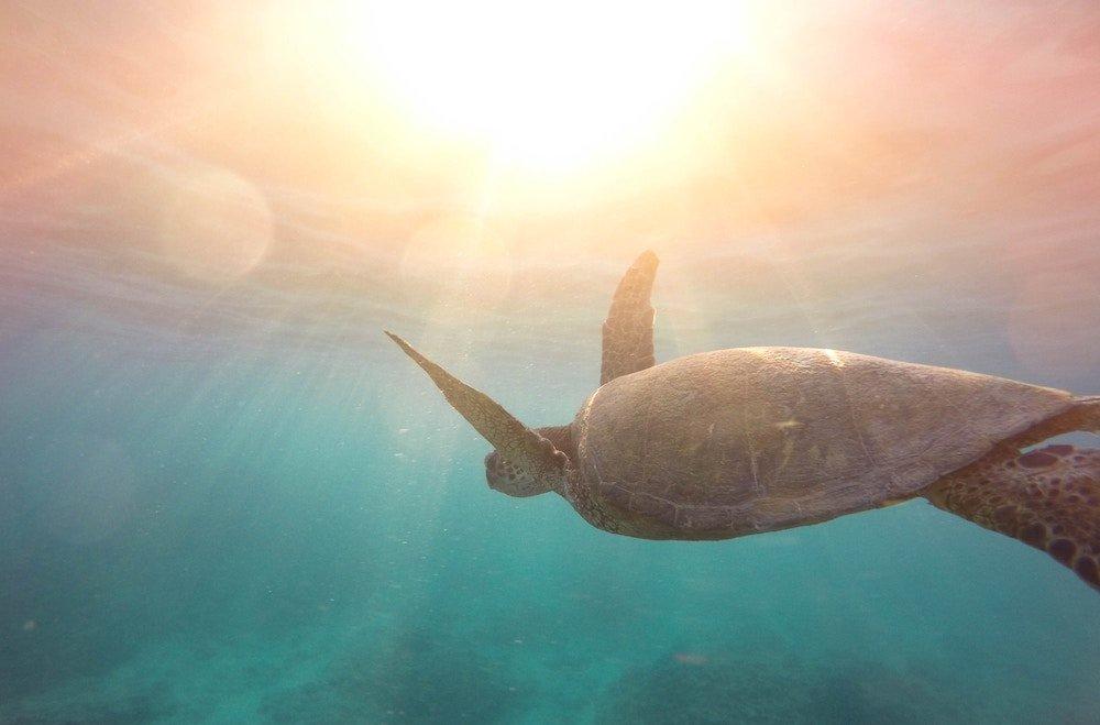 positive-news-indian-turtles.jpg