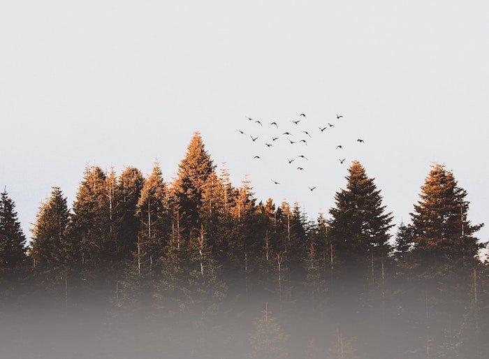 positive-news-plant-trees.jpg