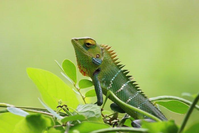 positive-news-reptiles.jpg