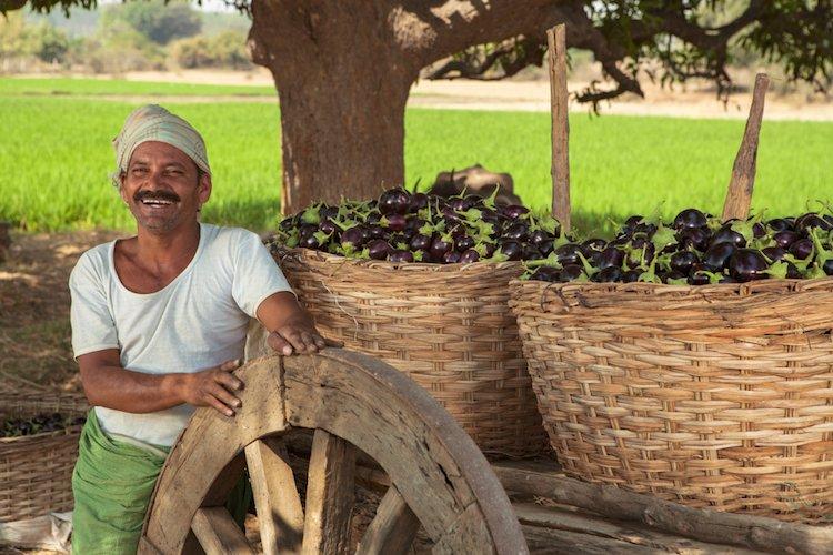 positive-news-october-indian-farm.jpg