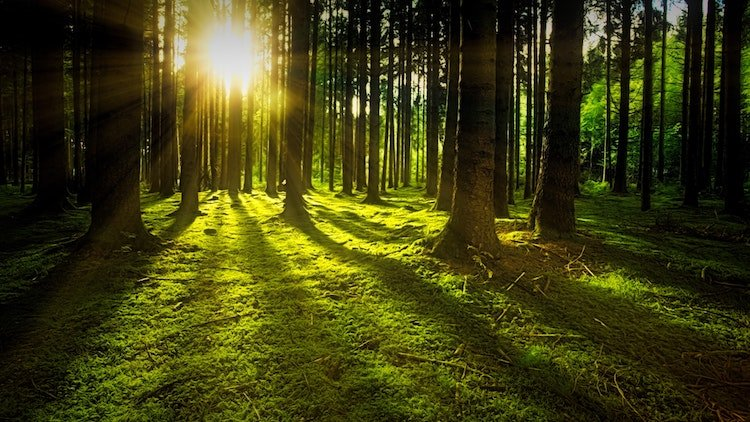 positive-happy-news-february-2019-forests.jpg
