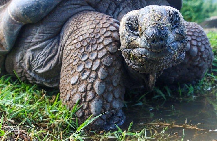 positive-happy-news-february-2019-tortoise-galopogas.jpg.ddecd747af1a653453ce1fc25720cd7b.jpg