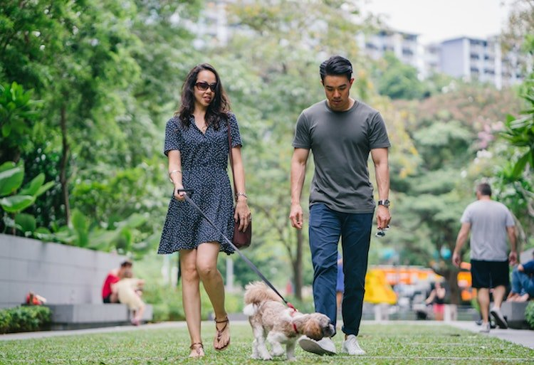 i-have-no-friends-make-new-dog-walking.jpg