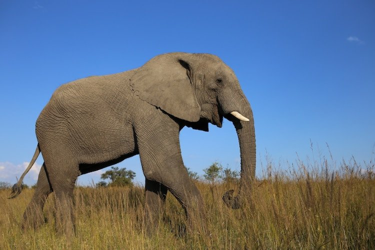 feel-good-news-african-elephant.jpg
