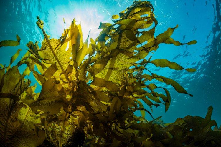 feel-good-news-seaweed.jpg