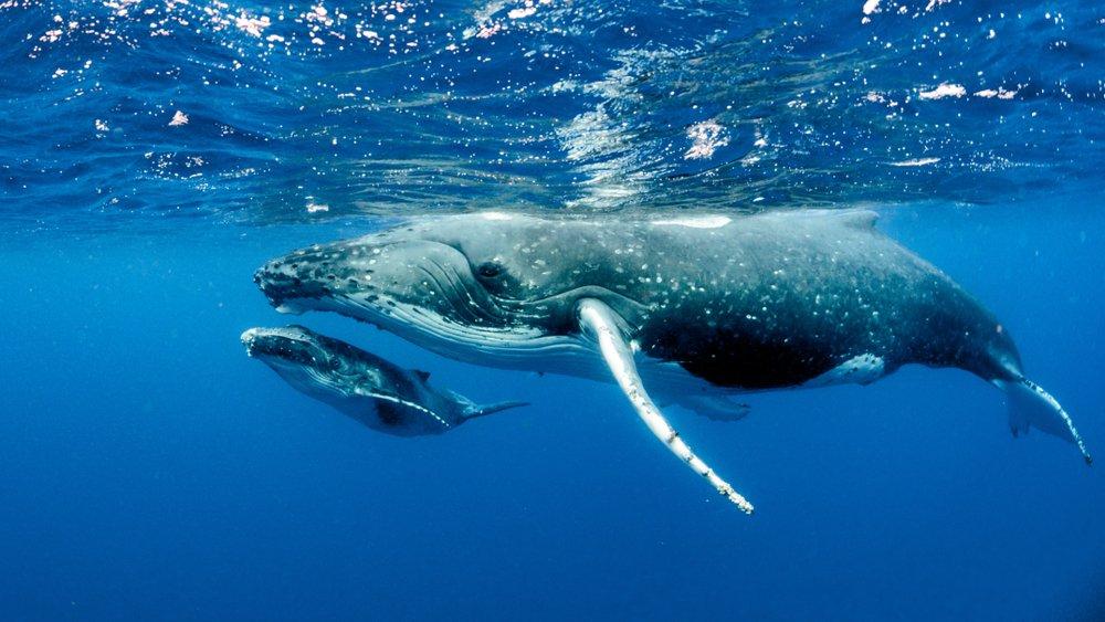 humpback-whale-positive-news.jpg