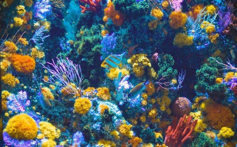 korallenriff-positive-nachrichten.jpg
