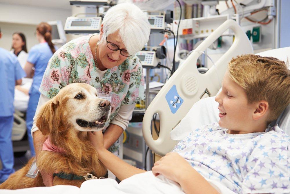 healing-power-of-pets-health-benefits.jpg