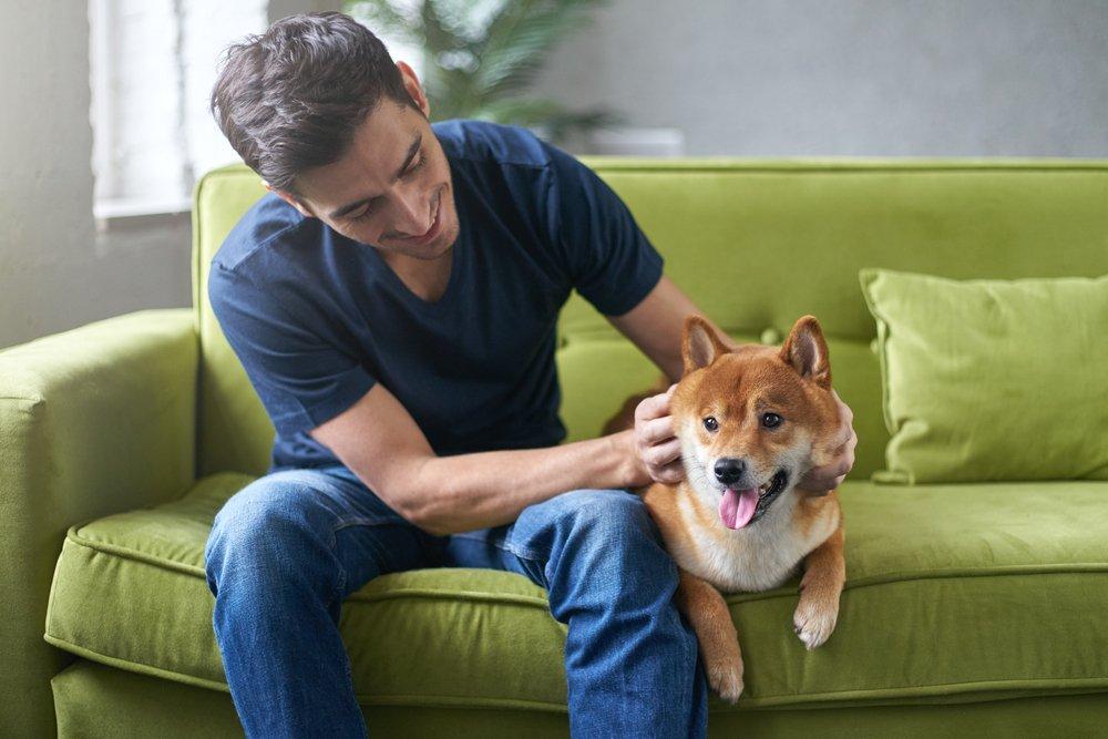 healing-power-pets-health.jpg
