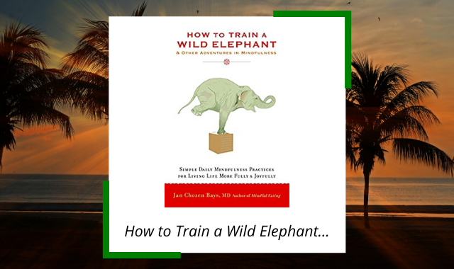 best-midfulness-books-how-to-train-wild-elephant.png