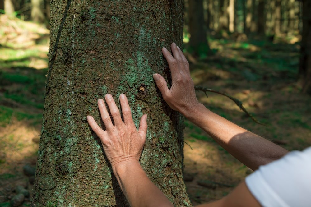 forest-bathing-benefits-touch-tree.jpg