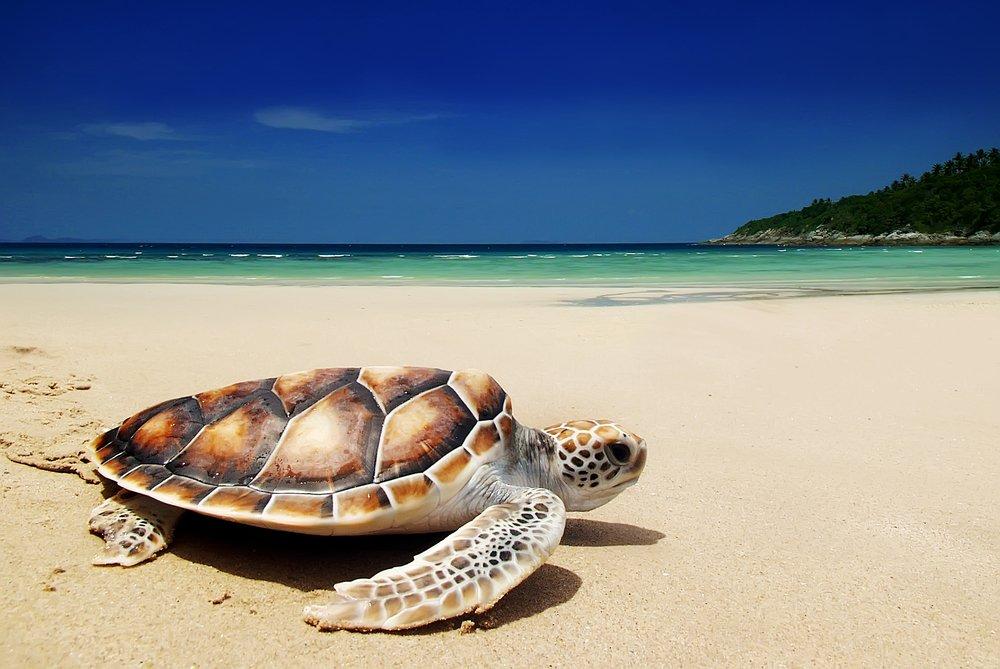 feel-good-news-sea-turtles.jpg