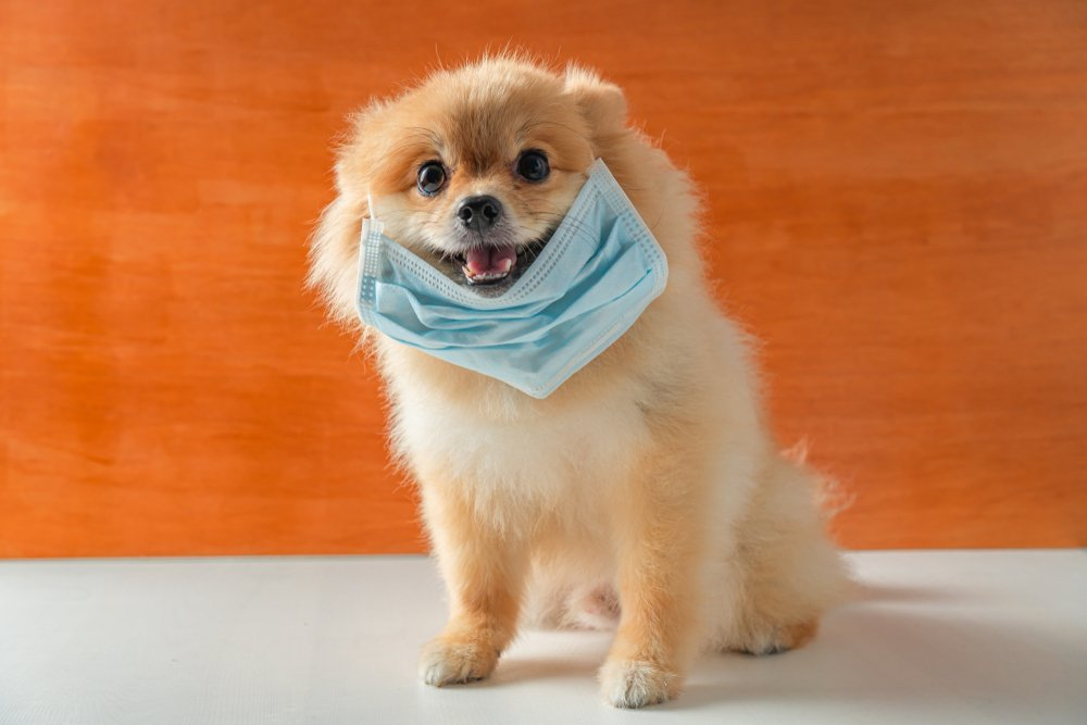 coronavirus-dogs-feel-good-news.jpg