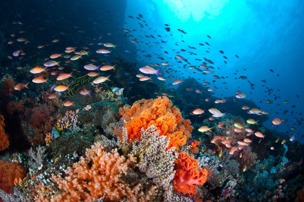 feel-good-news-coral-reef.jpg