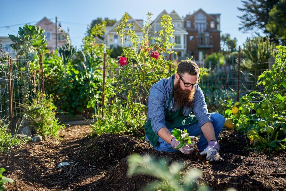 morita-therapy-gardening.jpg