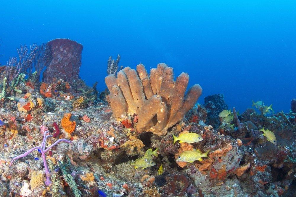feel-good-news-2021-coral-reef.jpg