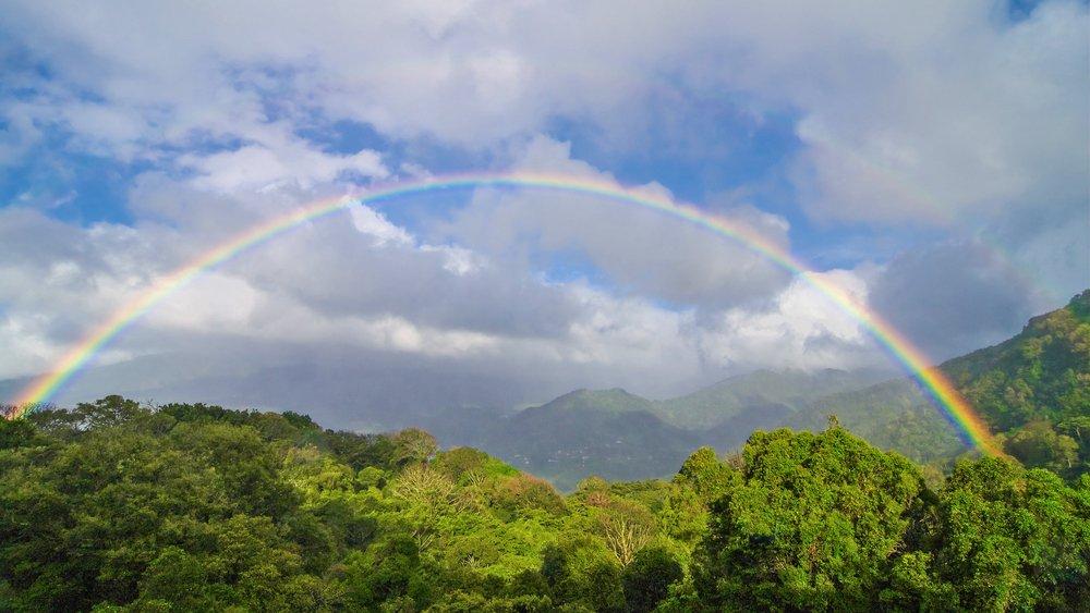 tropical-forest-panama.jpg