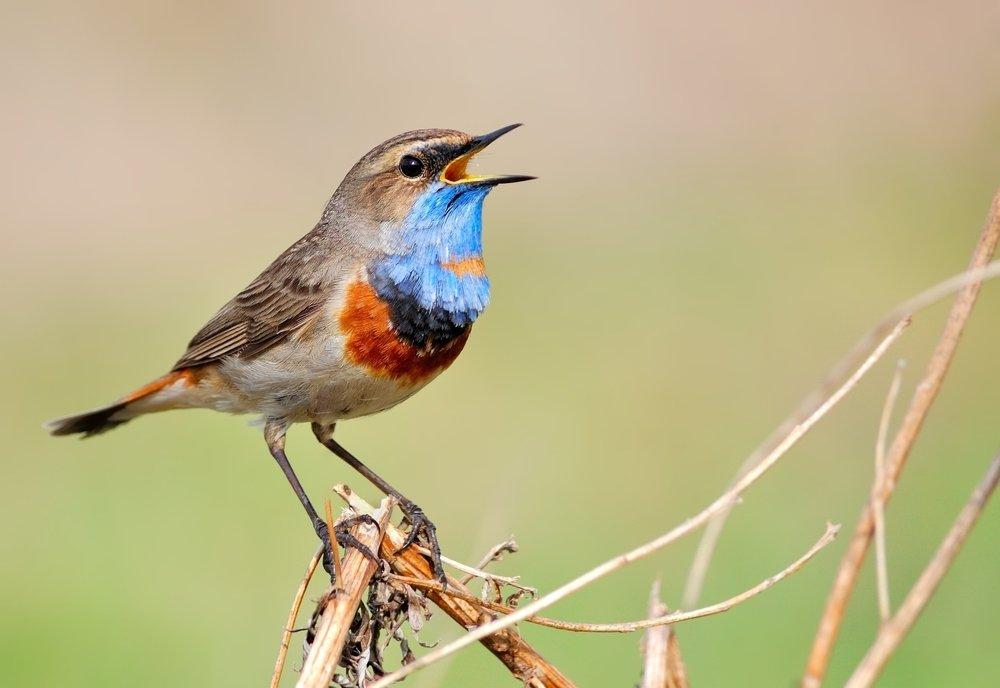 bird-song-feel-good-news.jpg