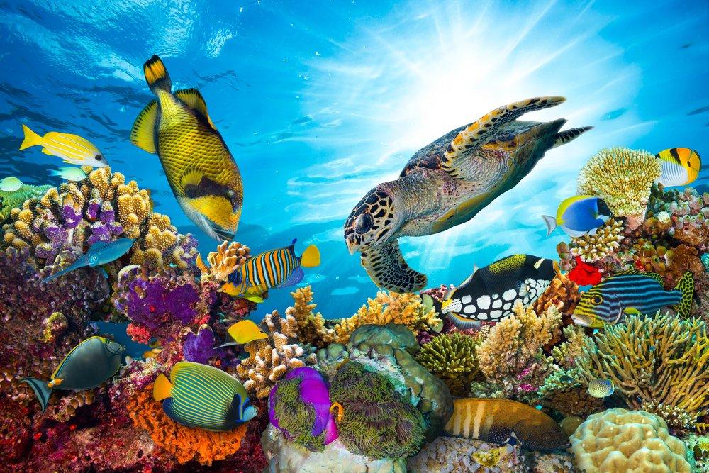 coral-reef-positive-news.jpg