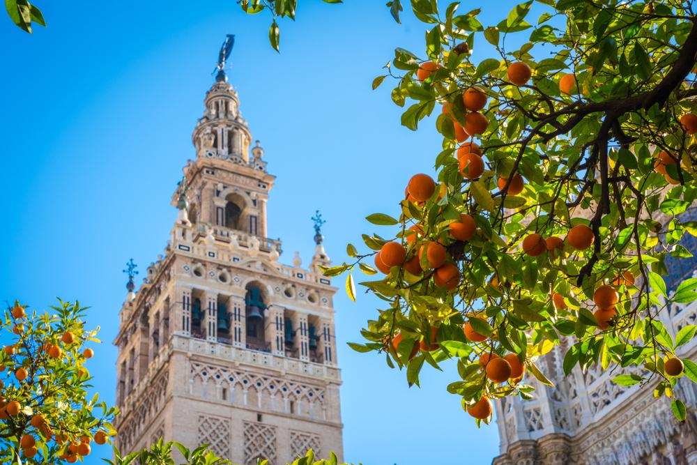 feel-good-news-seville-oranges.jpg