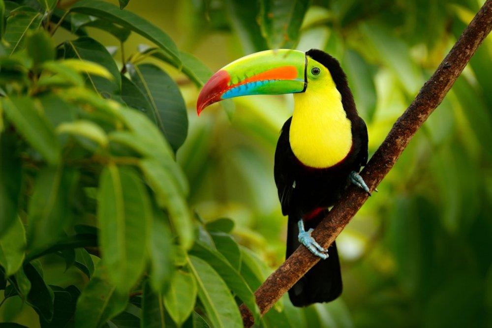 belize-toucan.jpg