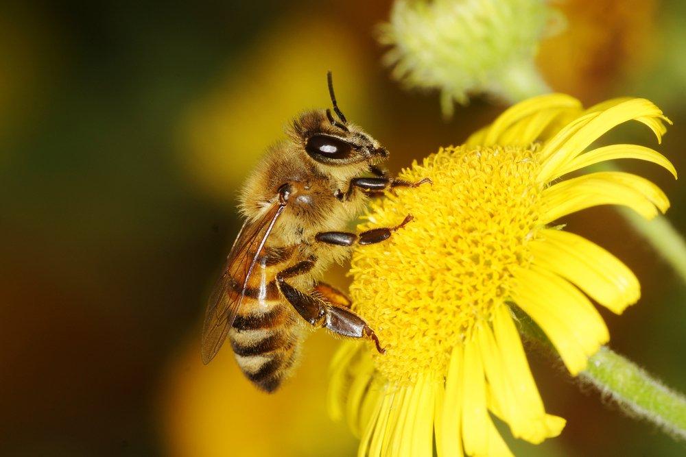 feel-good-news-bees.jpg