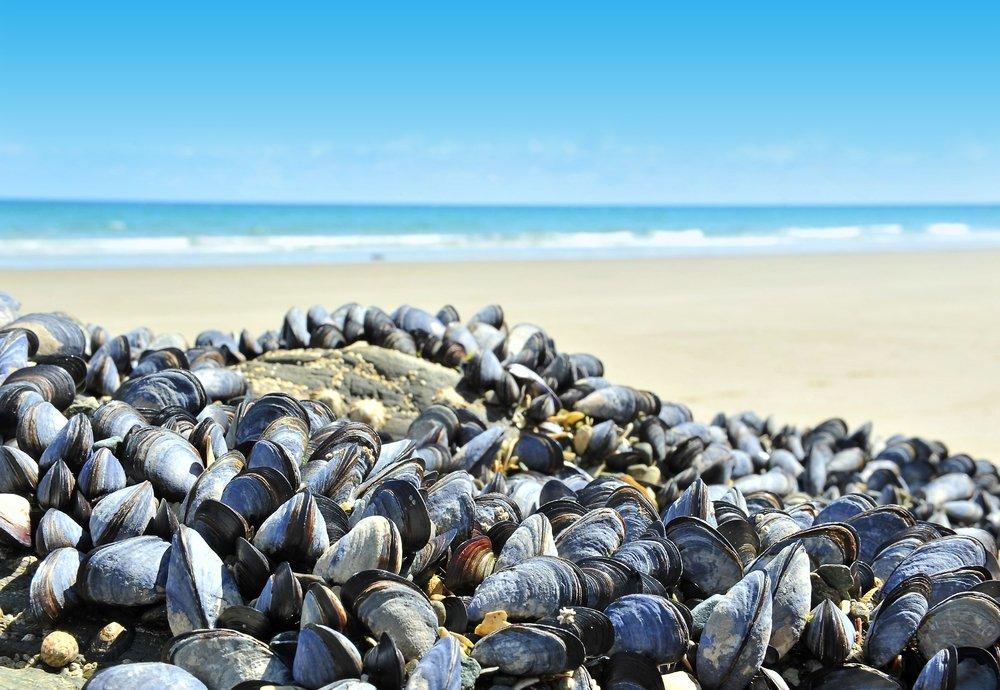 positive-news-mussels-microplastics.jpg